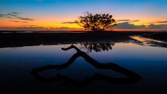 Nudgee (Visual Clarity Photography) Tags: 2017 au april australia autumn brisbane cloud d800e fall landscape longexposure niksoftware niksoftwarecolorefexpro nikkor19mmf4pce nikon nikond800e nudgee nudgeebeach photoshopcc2017 qld queensland reflection sunrise tiltshift tiltshiftlens trees