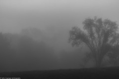 bw fog tree pierson park 10-13-16 (kmac1960) Tags: fog trees morning capturekc canon tamron kansas shawneemissionpark