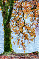 Fall Colors on Loch Oich #3 (Matt Anderson Photography) Tags: 2017 landscape mattandersonphotography scotland uk unitedkingdom hoarfrost magical color nopeople river garry loch oich invergarry december winter lush nature frost frosted fragility ethereal woodland tree outdoors paranormal mystery fantasy tranquilscene fog sunrisedawn coldtemperature scenics traveldestinations autumn idyllic meadow ephemeral emergence majestic ruralscene beautyinnature beechtree moss root perthshire theend lochoich fallcolors madison wisconsin usa