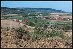 "Edge of a Field ("" Wiener Schule "") Tags: öbb oebb obb 2016 austria statzendorf eisenbahn railway railroad cityshuttle commuter train herkules"