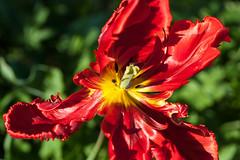 _7008148.jpg (fdc!) Tags: factueldescriptif floral flore nature naturemorte plante plantes termessurlaphotographie végétal végétalplantes végétation fdc2017 fleur