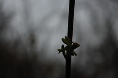 Plant in the dark (Kay Lay) Tags: plant black grey outside outdoor outdoors green plants spring sprout small badweather