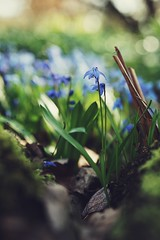 i will take care of you (christian mu) Tags: flowers bokeh botanicalgarden botanischergarten germany münster muenster nature christianmu sonya7ii sony planar planar5014 5014 50mm schlossgarten