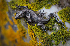 Tin Lizzy (SkyeWeasel) Tags: macromondays madeofmetal jewellery brooch lichen