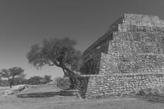 DSC01141 (blueeyedpop) Tags: mesoamerican pyramid ruins