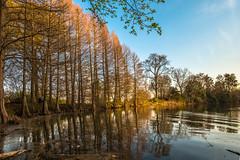 Toes in the Water - 2017-03-20_03 (Paul and Nalva) Tags: nx500 samsungnx500 rokinon12mmf2 piedmontpark tree 2017rpsjulylandscape