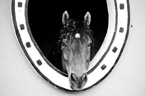 #scouting #horse #blackandwhite #blancoynegro #caballo