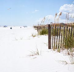 Gulf Shores Beaches (marysmyth(NOLA13) ️) Tags: 503cxi alabama beach fence film grasses gulfshores hasselblad kodakektar100 mediumformat seagull seaoats summer hff astormscoming