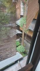 Kurosuke | 庭園 (ddio.tw) Tags: 2017 春 旅行 kyoto 京都 kurosuke 上七軒