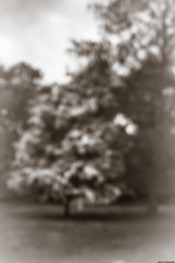 Tree (aljones27) Tags: cambridge cambridgeshire pinhole cam river university rivercam worldwidepinholephotographyday