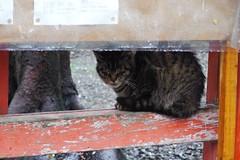 Today's Cat@2017-04-11 (masatsu) Tags: cat thebiggestgroupwithonlycats catspotting pentax mx1