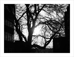 twisted (Howard Sandford) Tags: urban sunflare silhouette tree hfs