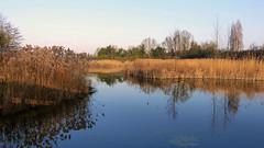 Roselière (Raymonde Contensous) Tags: parcdeschantereines nature roselière roseaux lacs hautsdeseine villeneuvelagarenne gennevilliers paysage reflets