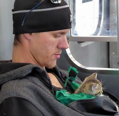Carrying a kitten on the Green Line (yooperann) Tags: man hat carries kitten front pack peeking out cta chicago transit authority green line elevated el