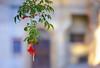 Цветочек во дворике (A.Gutkin) Tags: тоскана italy toscana tuscany flower colorful colorimage