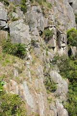 DSC_8530 (sch0705) Tags: hk hiking kowloonpeak standingeagleridge