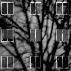 Tree by Three (photomatic.se) Tags: ifttt 500px abstract shadow black white shadows sweden stockholm minimalism