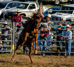 Man-vs-horse_DSC5556 (Mel Gray) Tags: dungogrodeo dungogrodeo2017 dungog newcastle hunterregion annualevent eastersaturday melgrayphotography cowboys cowgirls equestrianevents horseriding