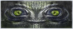 devil in the wood (pete ware) Tags: knot tree eyes mirror closeup greeneyes devil fun photoshop nikond7000 peteware eye makeup themartyfeldmanlook niksilverefexpro layermask colourandmonocombination tokina100mm greeneyeddevil wideeyed border frame
