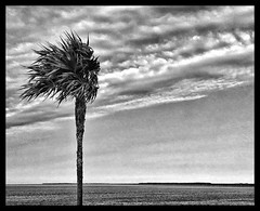 Thatch (GR167) Tags: ruleofthirds floridabay floridakeys monochrome bw blackandwhite 6x6 jaggr iphoneart iphoneography