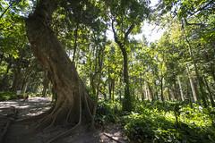 Parque Lage-Rio de Janeiro (AleCue) Tags: sonya99 riodejaneiro brasil parquelage sigma1224mm