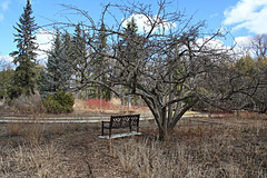 In the Garden (Cindy's Here) Tags: bench tree englishgardens assiniboinepark winnipeg manitoba canada canon 52in2017challenge seat 25 100xthe2017edition 100x2017 image21100