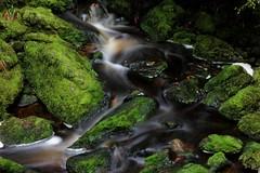 Clean Green (Tones Corner) Tags: nzbeauty nzbush green moss stream scenenzbushnative nzscene
