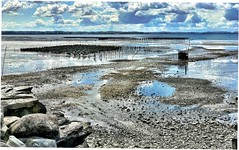 Oyster Beds, Chuckanut Creek, @taylorshelfish (jcurtis4082) Tags: squalicum lake road oyster taylor denmark john kimberly clam crab