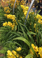 2017-03-18_0551i_waldor (lblanchard) Tags: 2017flowershow displaygarden waldor