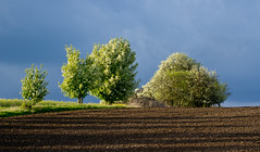 Baumblüte (gutlaunefotos ☮) Tags: natur bäume strauch feld frühling blüte baumblüte schatten licht himmel wolken