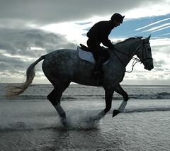 Brad, Sal, William & Gabs Alnmouth Beach 21Oct 10 (82) (kampalakid63) Tags: memories robinson surf eventing brad horse northeast northumberland alnmouthbeach alnmouth beach