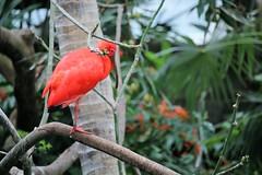 Moody Gardens Rainforest Museum (joyannmadd) Tags: animals wild rainforest exotic birds bats forest humid fish water monkey orchids flower plants galveston texas moodygardens pyramid educatinal species