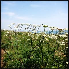 2014-06-22-0099.jpg (Fotorob) Tags: planten engeland isleofwight england freshwater