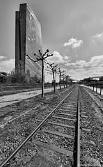 Frankfurt 1 (rainerneumann831) Tags: frankfurt ezb schienen gleise bäume blackwhite hochhaus gebäude architektur