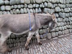 2009-09-28-0129.jpg (Fotorob) Tags: devon engeland voorwerpenoppleinened muur dieren wandelen travel city erfscheiding england clovelly