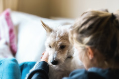 The Look of Love..... (christilou1) Tags: sony a7rii fe85 14 gm girl dog jack russell terrier portrait soft mastin labs