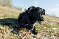 Happy Phoebe (Robert Fritz) Tags: burgenland neusiedlersee phoebe 1dxii austria dog animal color happiness happy sun vacation relaxing österreich hund
