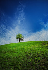 Tree (rgbshot72) Tags: sky landscape sunset spring blue sun clouds tree beautiful grass white green minimalism hill