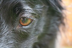 Bandit Eye (Rachael Marie M) Tags: dog happy bordercollie bandit dogsdogsdogs