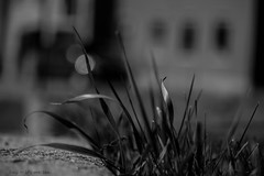 Grass and light (hey ~ it's me lea) Tags: bw monochrome grass wall blackwhite bokeh cement nanton hmbt