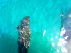 IMG_2423 (aurora borealis lover1555) Tags: beauty mexico dolphin dolphins boating tropical bajacalifornia bajacaliforniasur bajasur loreto tropics seaofcortez carmenisland mexicodolphins loretobaja
