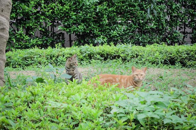 Today's Cat@2013-07-14