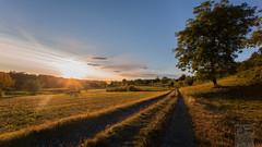 To Heaven [Explored] (Daniele Pauletto) Tags: light sunset sun tree field heaven strada tramonto path hills cielo sole luce colline campi skt clousd