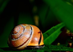 Still casts a shadow...... (Keith Grafton) Tags: nature nikon snail lancashire d800 heysham