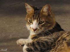 Luther (JavierG.) Tags: argentina cat mascota canonpowershotsx10is