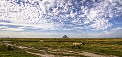 the famous sheep of the salt meadows (StephanieB.) Tags: sky landscape sheep moutons montsaintmichel prssals sonyslta65 cloudspaysage