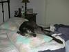 GreyhoundPlanetDay2008002