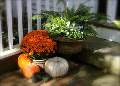 Autumn On Nantucket (flowerwine) Tags: autumn light shadow brick fall pumpkin island nantucket chrysanthemum 18200mm canon7d