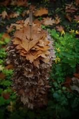 autumn, stuck on a stick (pix-4-2-day) Tags: autumn brown green fall leaves garden fun funny stuck laub herbst bamboo lustig stick braun stab bltter garten witzig bambusstab pix42day
