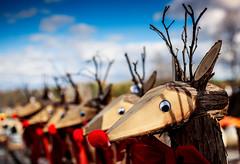 Ready to Season (Dan Haug) Tags: rudolf millersfarm manotick reindeer christmas early outdoors nature wood wooden decorations xmas googlyeyes antlers bows season ef35mmf14lusm canon eos 5dmkii explore explored